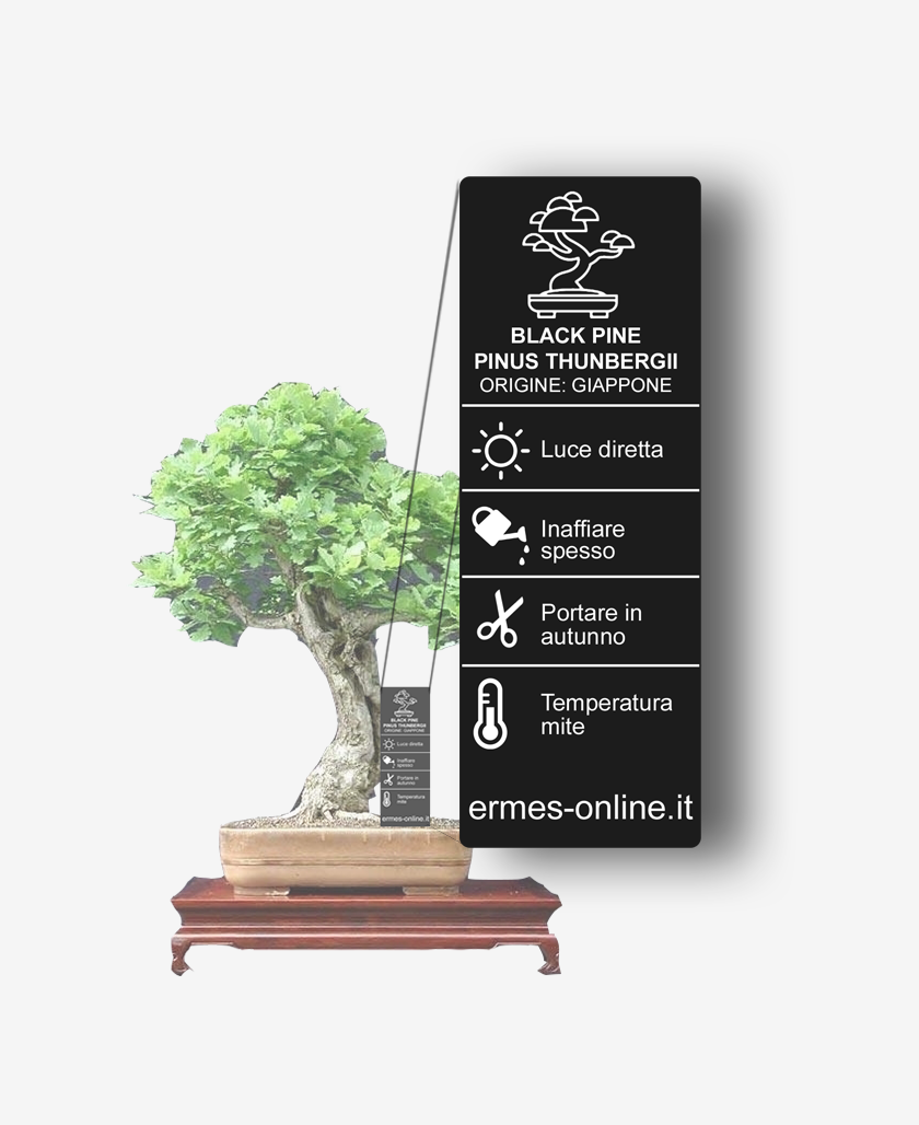 Vertical black tag with plant