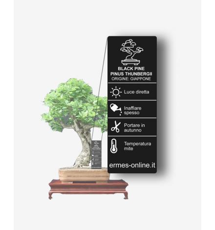 Cartellino nero verticale con pianta
